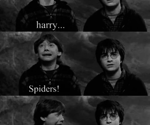 harry potter, spider, and funny image