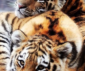 animals, sweet, and wallpaper image
