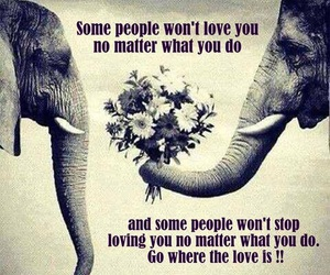 love, quotes, and elephant image
