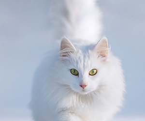 cat, snow, and white image