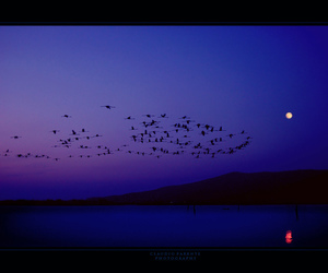 birds, blue, and bestcapturesaoi image