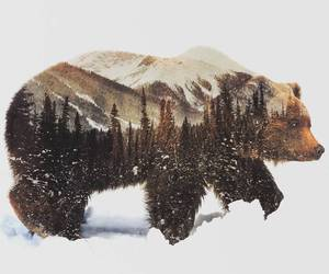 bear, nature, and animal image