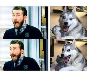 chris evans, dog, and fun image