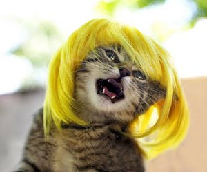 beautiful, wig, and cat image