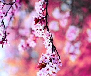 blooming, flower, and branch image