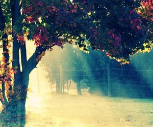 tree, nature, and sun image