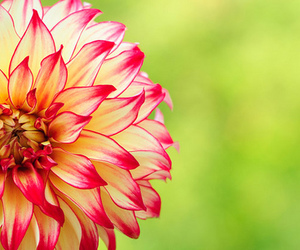 flowers, pretty, and photography image