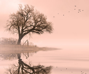 birds, pink, and tree image