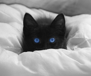cat, black, and blue image