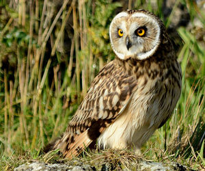 owl and nature image