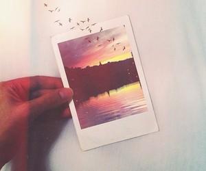 bird, photo, and photography image