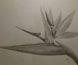 drawing, flowers, and pencil image
