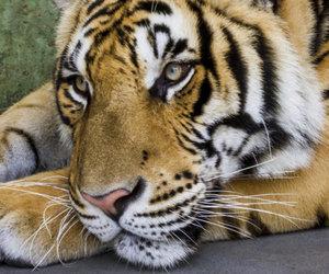 animal, beautiful, and calm image