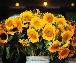 flowers, sunflowers, and photography image