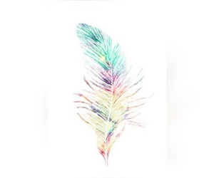 feathers and colour feather image