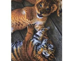 love, animal, and tigers image