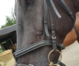 equestrian, happy, and horse image