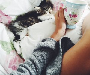 cat, drink, and goals image