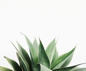 green, plants, and white image
