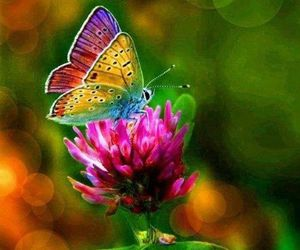 butterfly, nature, and colored image