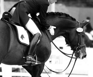 dressage, germany, and pferd image