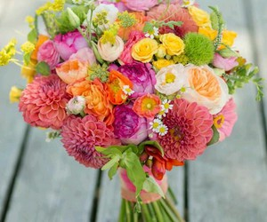 flowers, colored, and bundle image