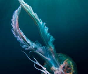indie, jellyfish, and cool image