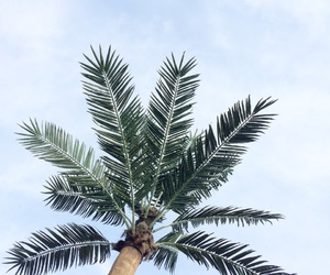 exotic, palmtree, and vibes image