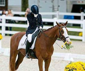 dressage, equestrian, and fail image