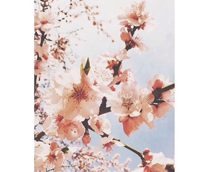 aesthetic, nature, and flowers image