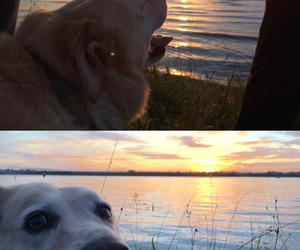dog, inu, and perro image