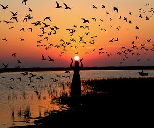 birds, orange, and silhouette image