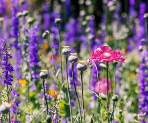 flower, flowers, and meadow image