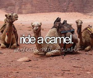 camel, bucket list, and before i die image