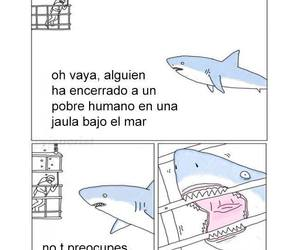tiburon and imagenes graciosas image