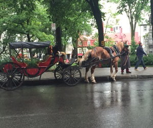 carriage, quebec, and street image