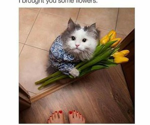cat, flowers, and funny image