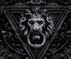 lion, black, and dark image