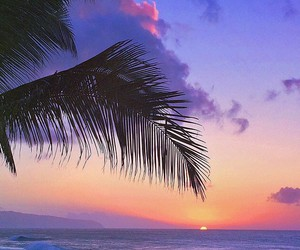 sunset, palm trees, and nature image