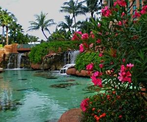 flowers, water, and pretty image