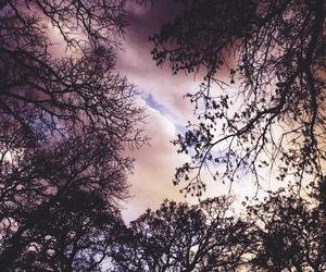 sky, tree, and beautiful image