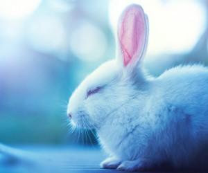 fluffy, rabbit, and sleeping image
