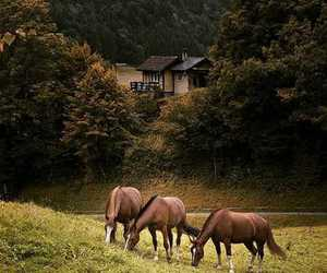 beautiful, love, and horses image