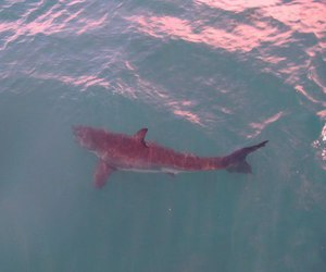 shark, water, and pink image