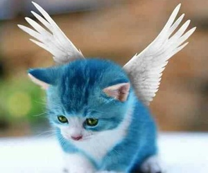 blue, cat, and happy image