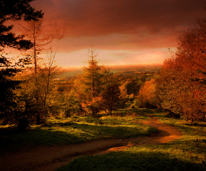 afternoon, forest, and autumn image