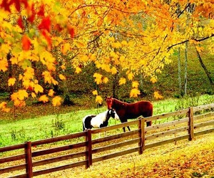 autumn, horses, and country image