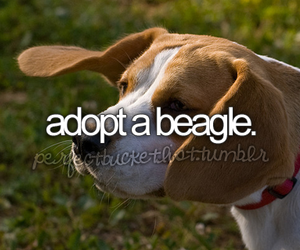 beagle, adopt, and before i die image