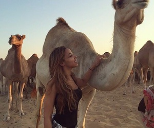 animals, camel, and cute image