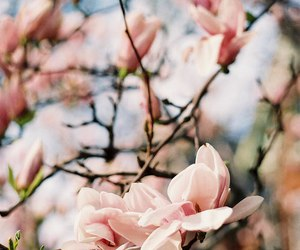 flowers, spring, and pink image